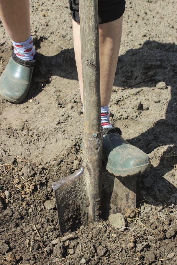 Tierra de excavación de la pala en el jardín foto de archivo