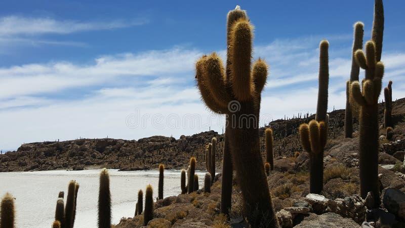 Tierra del cactus en desierto seco imagenes de archivo