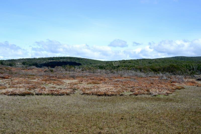 Tierra del Fuego imagem de stock royalty free