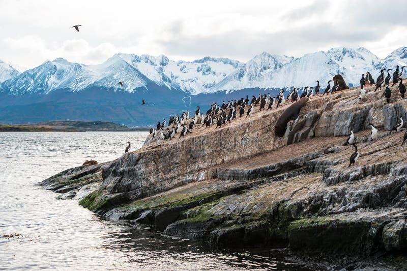 Tierra del Fuego, la Argentina - Chile fotografía de archivo libre de regalías