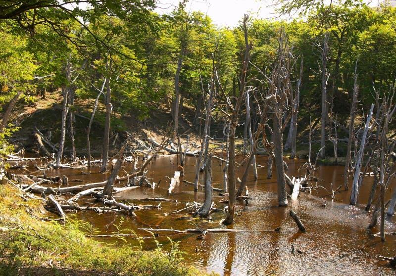 Tierra del Fuego National Park Forest fotografia de stock royalty free