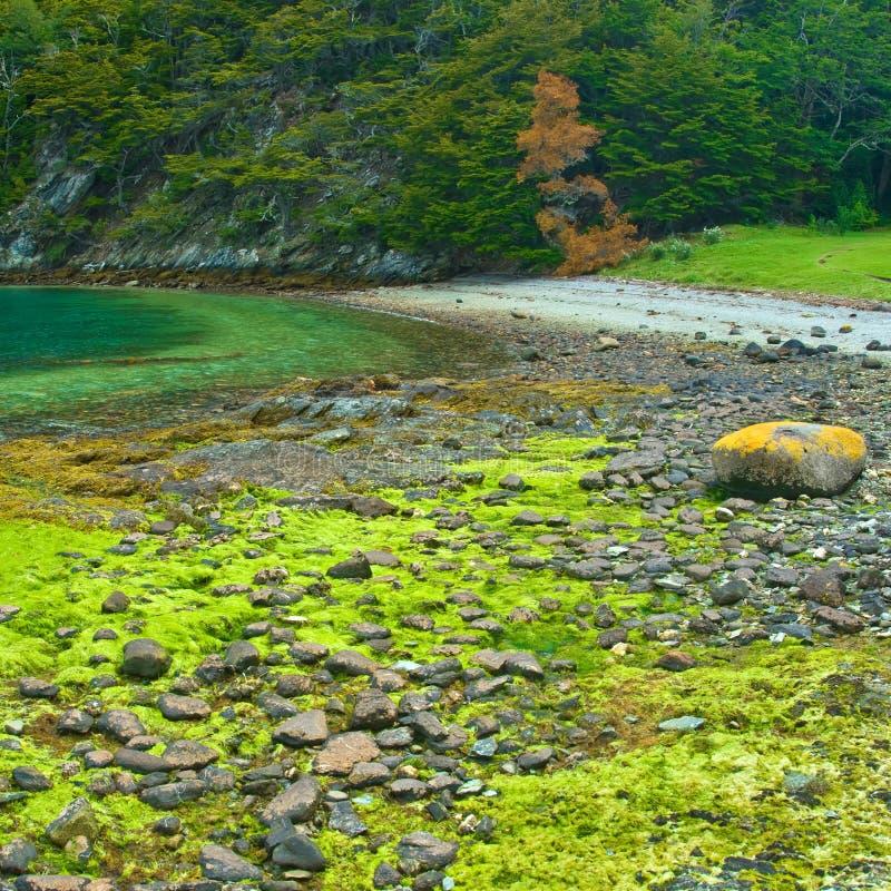 Tierra Del Fuego National Park Near Ushuaia, Royalty Free Stock Photo
