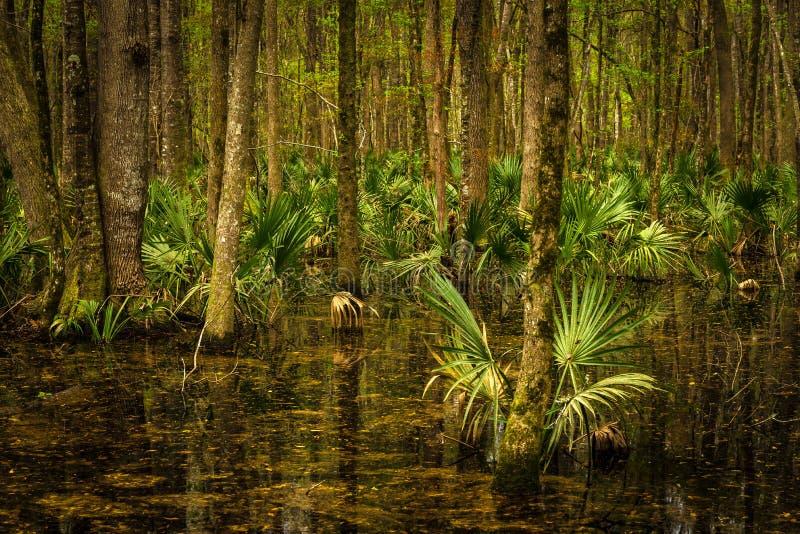 Tierra del pantano de la bahía de la botánica foto de archivo