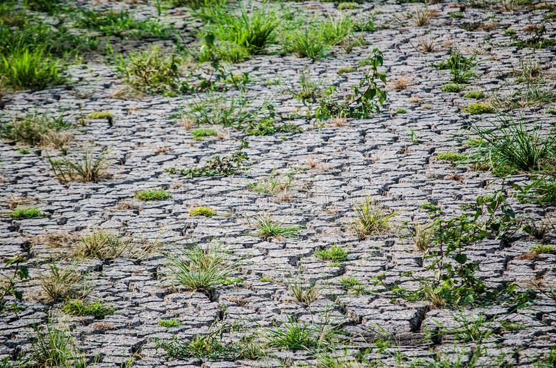 Tierra del suelo seco de la grieta con la mala hierba verde fotos de archivo libres de regalías