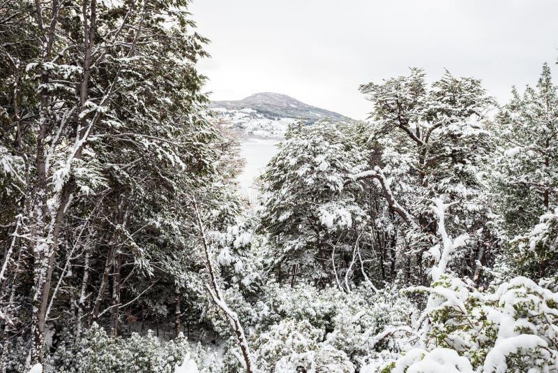 Tierra Fuego National Park foto de stock royalty free