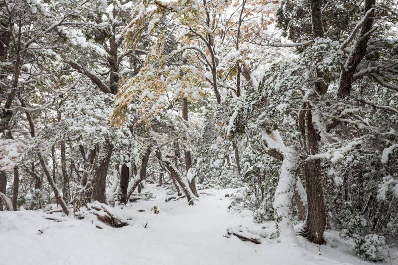 Tierra Fuego park narodowy zdjęcia royalty free