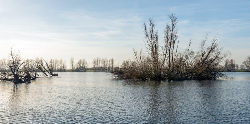 Tierra inundada con los árboles desnudos temprano por la mañana fotografía de archivo