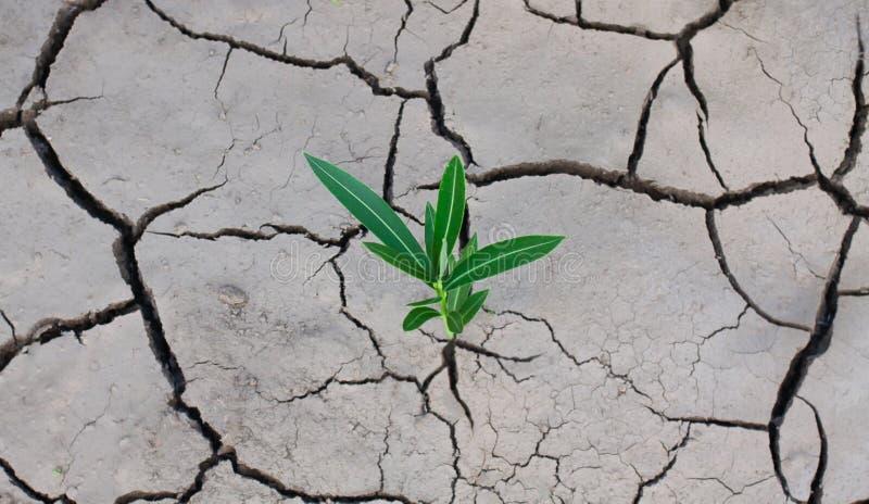 Tierra seca agrietada y una planta sola verde que se rompe a trav?s de la grieta imagenes de archivo