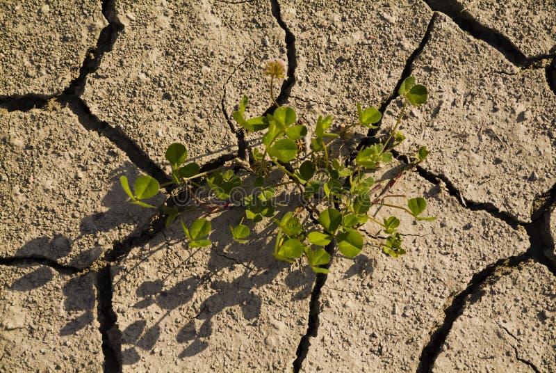 Tierra seca con las grietas imagen de archivo