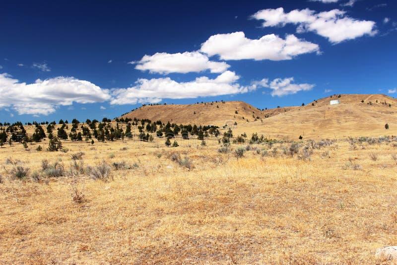 tierra seca de los árboles fotos de archivo libres de regalías