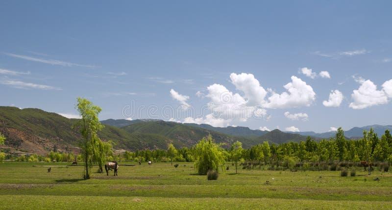 Tierras De La Pradera Del Balanceo Con El Caballo Foto de archivo