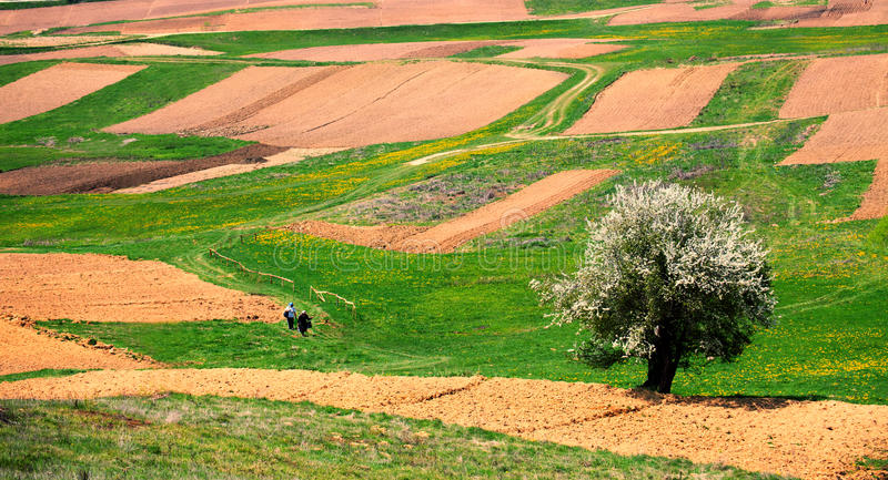 Tierras de labrantío búlgaras imagenes de archivo