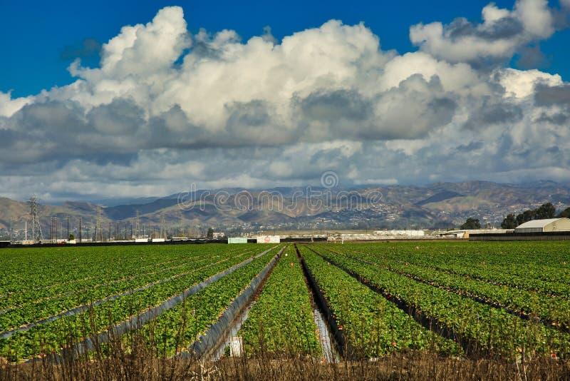 Tierras de labrantío California de Oxnard foto de archivo