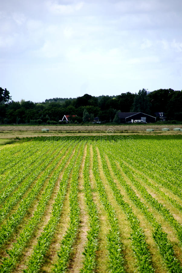 Tierras de labrantío cerca de Amsterdam foto de archivo