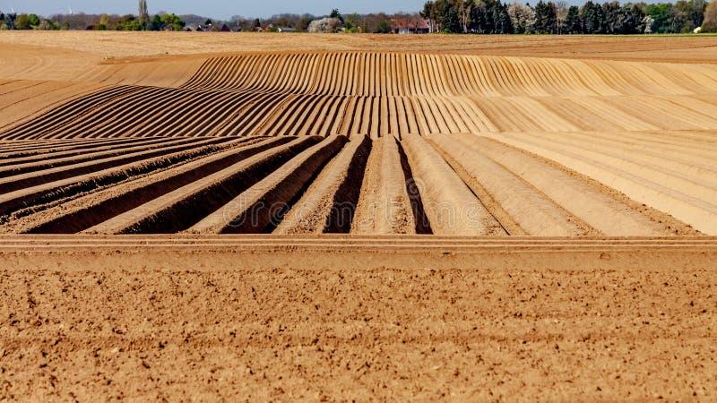Tierras de labrantío con el suelo preparado con en la línea surcos para las patatas crecientes fotografía de archivo