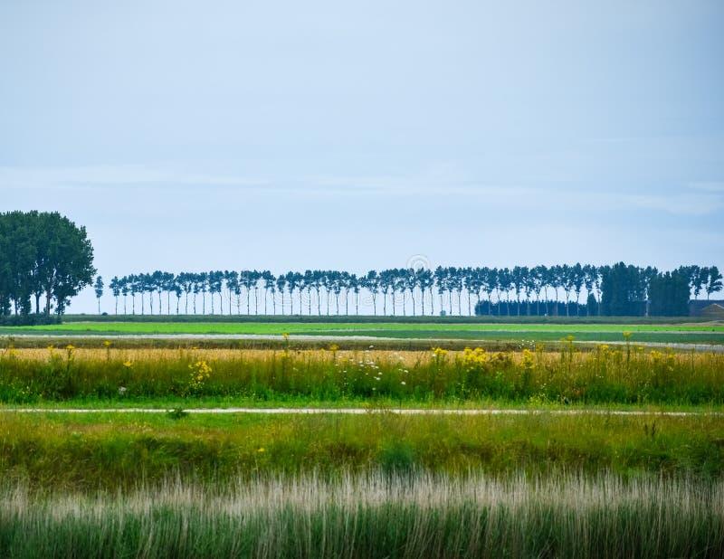 Tierras de labrantío con los prados, los árboles y el cielo azul fotografía de archivo