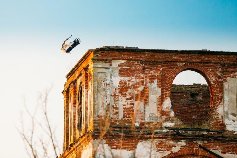 Tierras europeas de la cigüeña blanca en la pared de la iglesia ortodoxa arruinada vieja foto de archivo