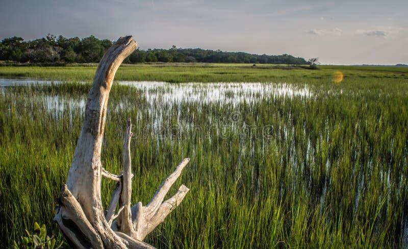 Tierras mojadas del terreno pantanoso de la plantación de Edisto Carolina del Sur en la puesta del sol imagen de archivo libre de regalías
