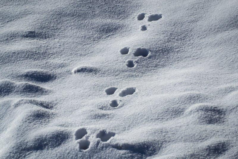 tierspuren im schnee stockfoto bild von spuren outdoor. Black Bedroom Furniture Sets. Home Design Ideas