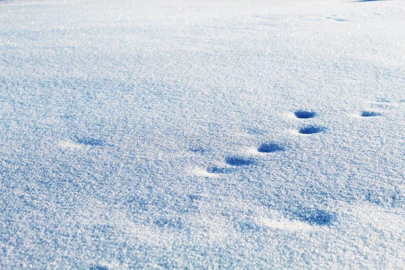 Tierspuren im Schnee lizenzfreie stockbilder