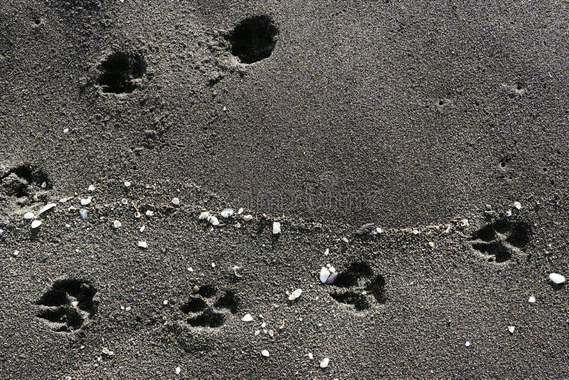 Tierspuren und Oberteile im Sand an der Küste, schwarzer Sandstrand - Schwarzes Meer, Georgia, schöner Hintergrund stockfotografie