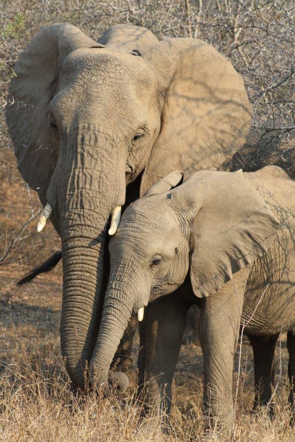 Tierwild lebende tiere lizenzfreies stockbild