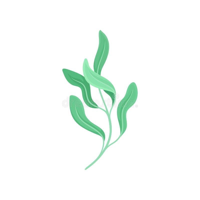 Tige avec cinq feuilles légères Illustration de vecteur sur le fond blanc illustration de vecteur