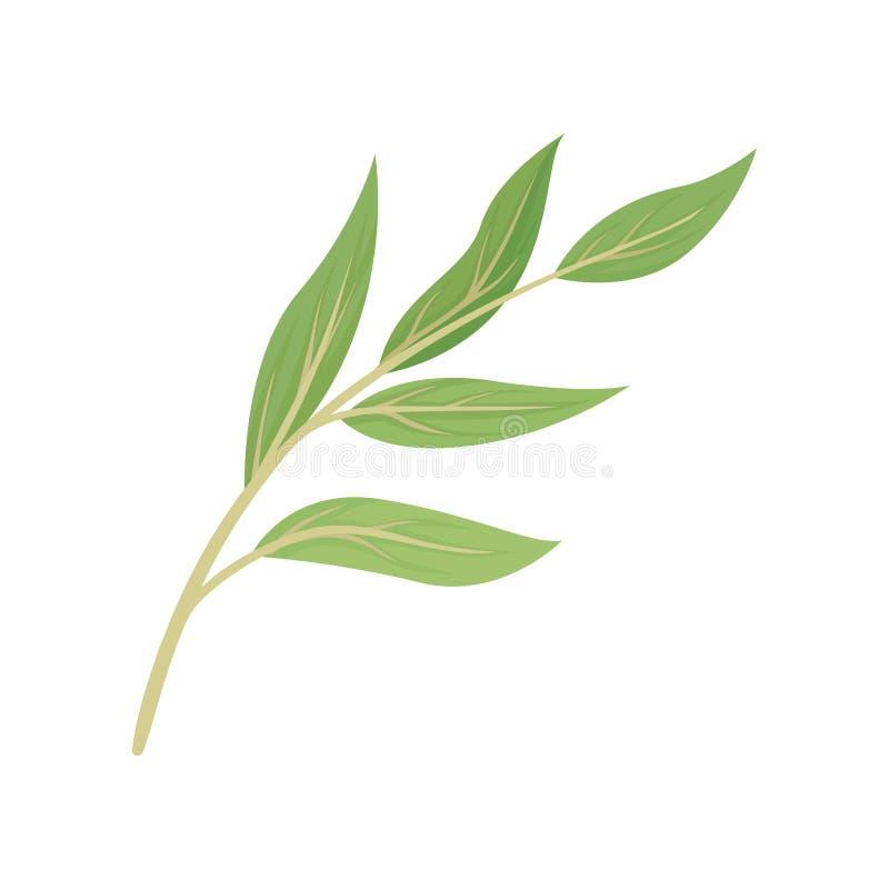Tige beige avec des feuilles Illustration de vecteur sur le fond blanc illustration de vecteur