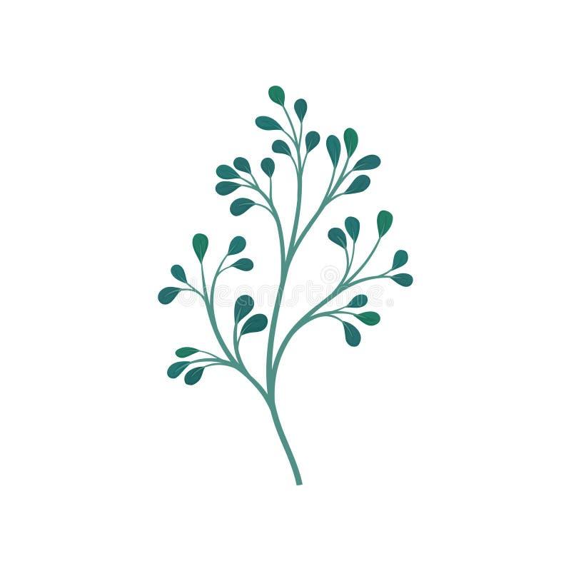 Tige branchue vert-foncé avec des feuilles Illustration de vecteur sur le fond blanc illustration de vecteur