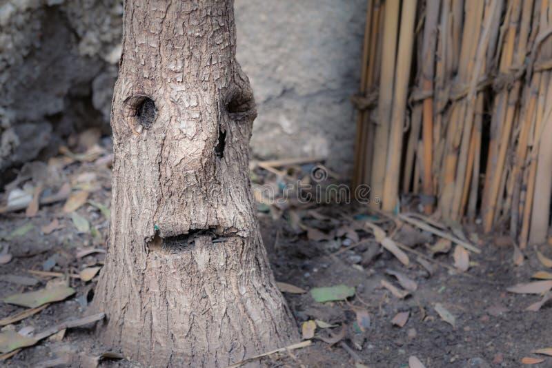 Tige d'arbre qui ressemble à un visage pleurant avec une larme sur un b image stock