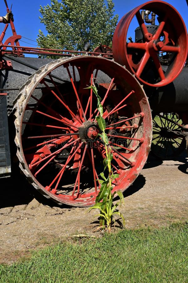 Tige de maïs s'élevant à côté d'une machine à vapeur image libre de droits