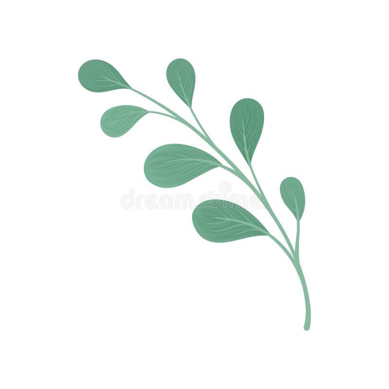 Tige droite avec les feuilles en forme de larme Illustration de vecteur sur le fond blanc illustration de vecteur