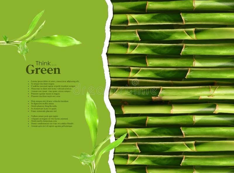 Tige en bambou dense illustration libre de droits