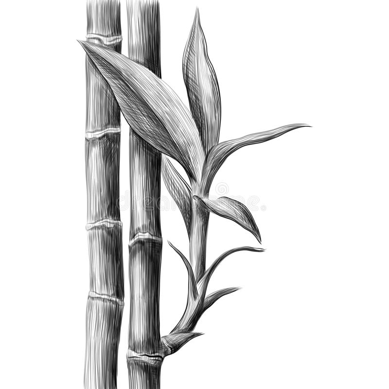 Tige et feuilles en bambou Illustration tir?e par la main de croquis de vecteur illustration libre de droits