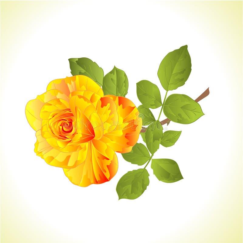 Tige jaune de fleur et illustration roses de vecteur de fond naturel de cru de feuilles editable illustration de vecteur