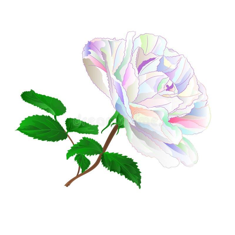 Tige rose colorée simple avec des feuilles naturelles et cru d'ensemble et de silhouette sur une illustration blanche de vecteur  illustration libre de droits