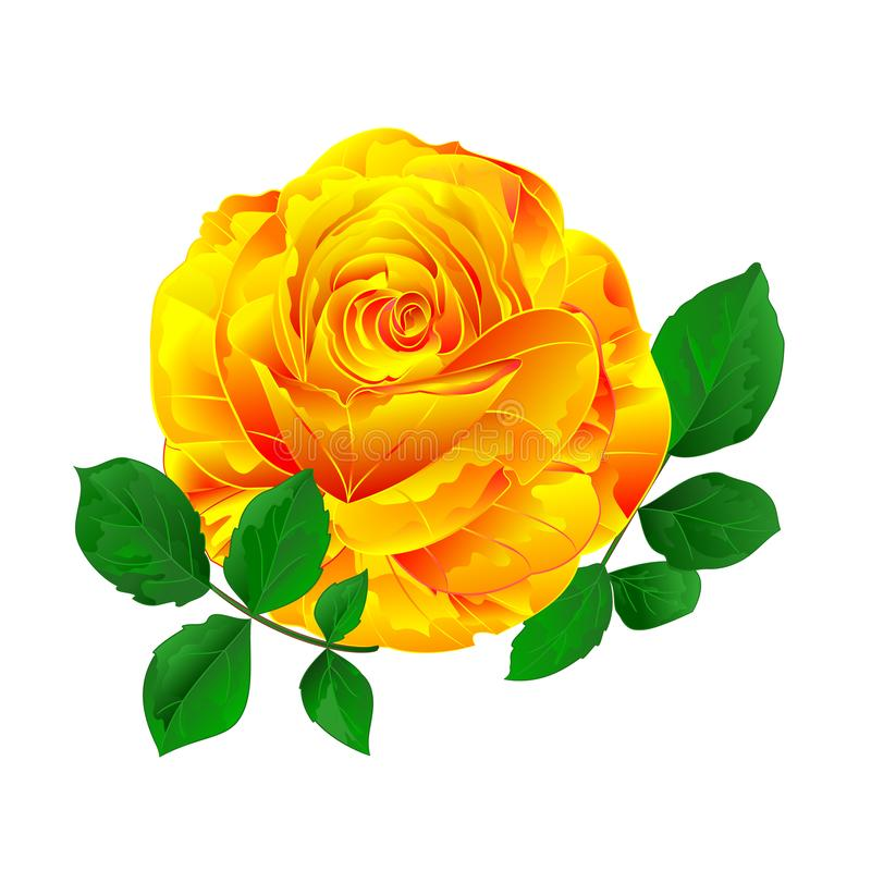 Tige simple rose jaune avec le cru de feuilles sur une illustration blanche de vecteur de cru de fond editable illustration stock