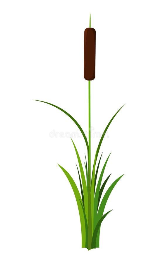 Tige tubulaire simple avec le vecteur d'usine de feuilles d'isolement sur le fond blanc illustration stock