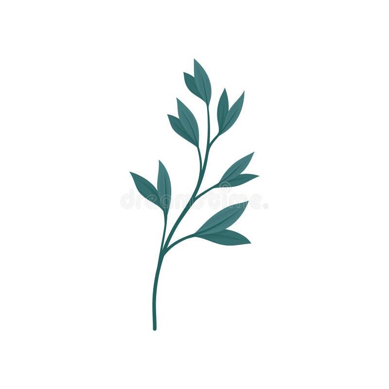Tige vert-foncé avec des feuilles Illustration de vecteur sur le fond blanc illustration libre de droits