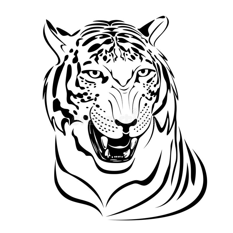 Download Tiger stock vector. Illustration of power, feline, safari - 19516498