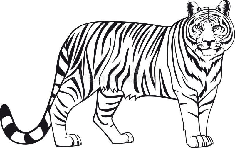 Download Tiger stock illustration. Image of black, stripes, animal - 4629064