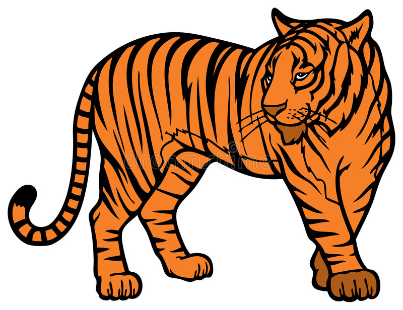 Download Tiger stock vector. Image of predator, asia, bengal, southern - 7810207