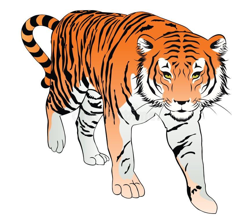 Tiger, Abbildung vektor abbildung