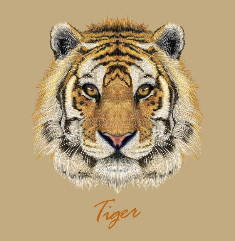 Free Tiger Animal Face. Vector Bengal Head Portrait. Realistic Fur Beast Of Tiger. Predator Eyes Of Wildcat. Big Cat Head On Beige Stock Image - 142306921