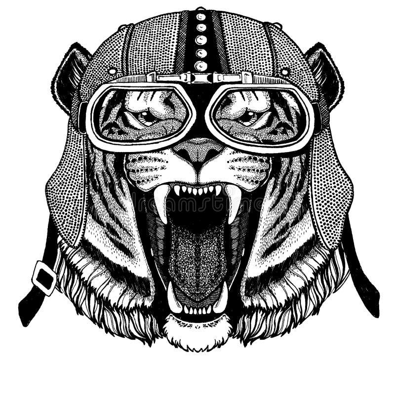 Tiger bärande motorcykel för löst kattdjur, aero hjälm Cyklistillustration för t-skjortan, affischer, tryck royaltyfri illustrationer