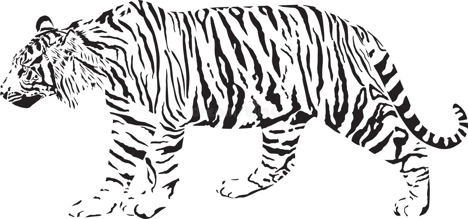 Tiger - Black and white royalty free illustration