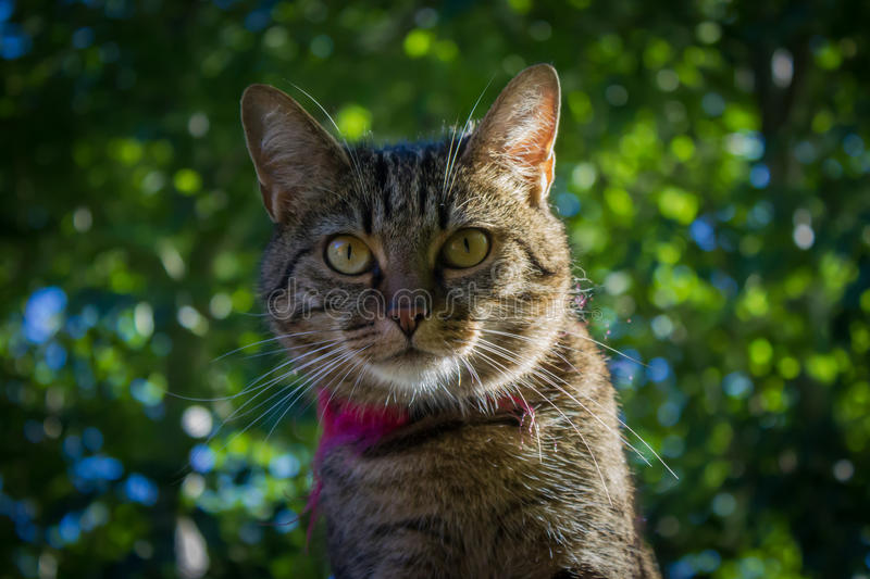 A tiger cat on the roof, face in focus. Face of an european house cat, tabby, tiger cats face, cat on the roof stock image