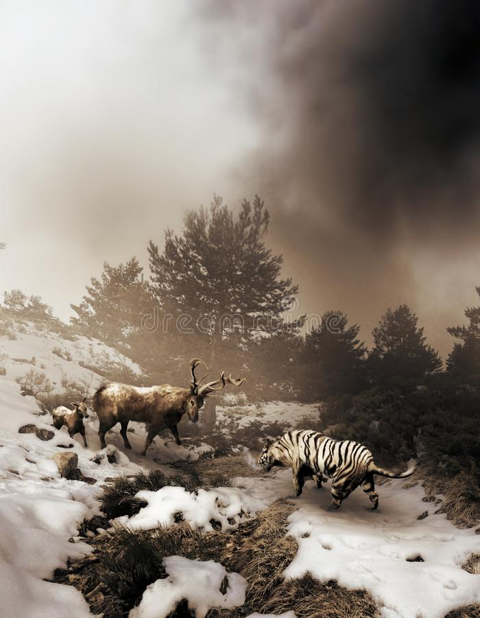 Tiger and deer confrontation. On a snowy field, a siberian tiger faces a deer who protects his baby stock illustration