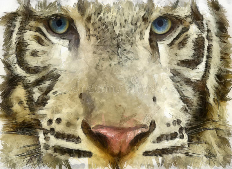 Tiger Face lizenzfreies stockfoto