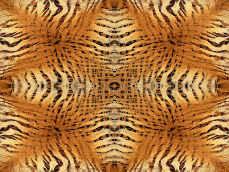 Tiger fur pattern royalty free stock photography